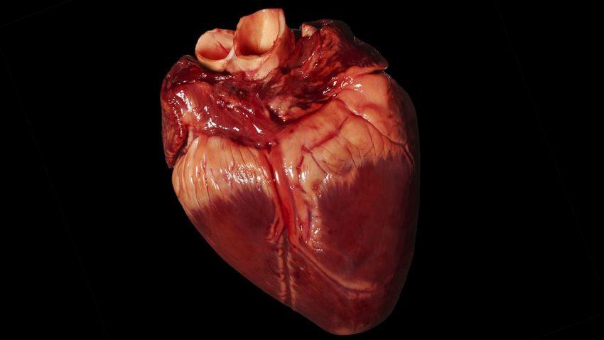 Širdis ir meilė