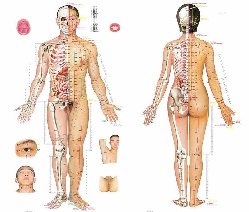 Taškai, skirti kraujospūdžiui mažinti - akupunktūra hipertenzijai gydyti
